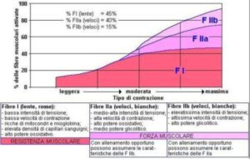 10.fenotipo_fibre_muscolari