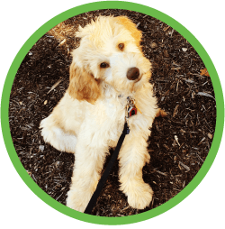 St Louis MO Puppy Training