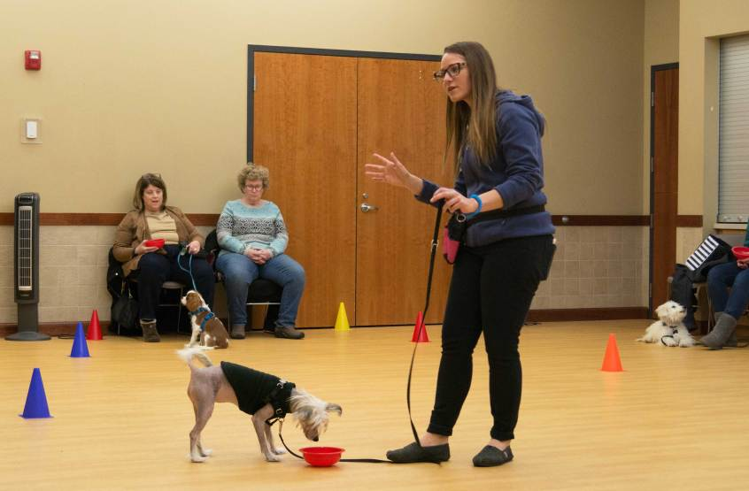St Louis Dog Training Classes Persuaded Pooch Nicole Veile