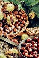umbria funghi umbria castagne assisi itinerari gourmet