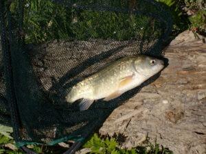 pesca nel fiume tordino
