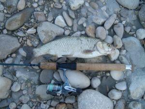 cavedano pescato al fiume vomano