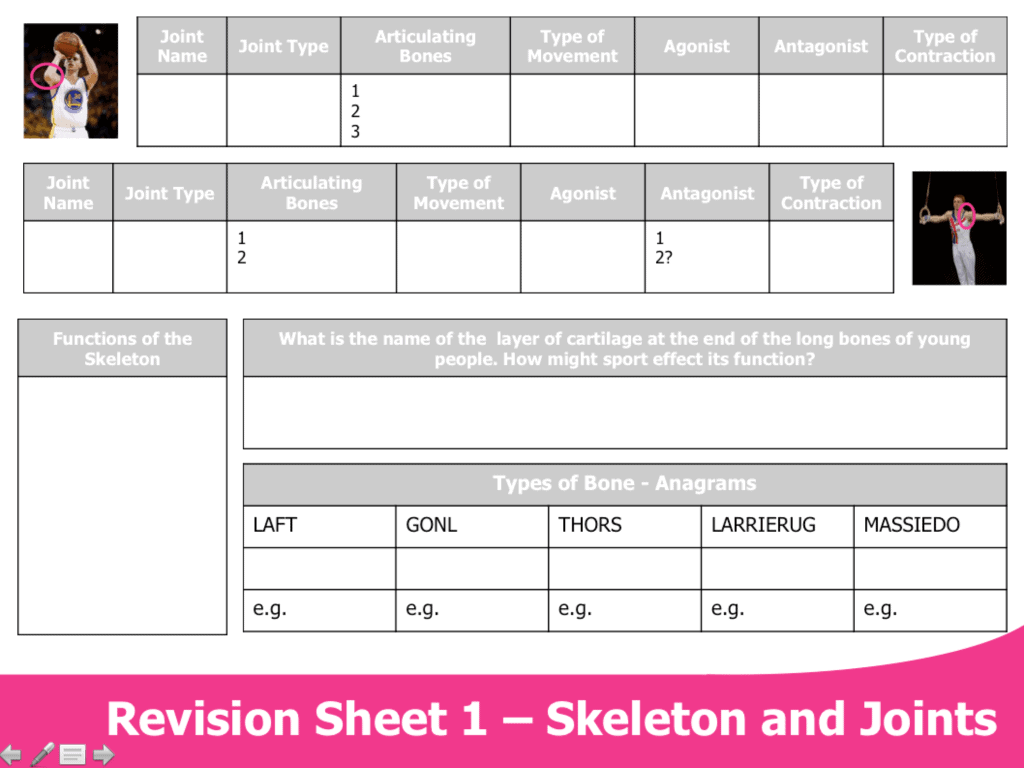 Skeleton And Joints Worksheet