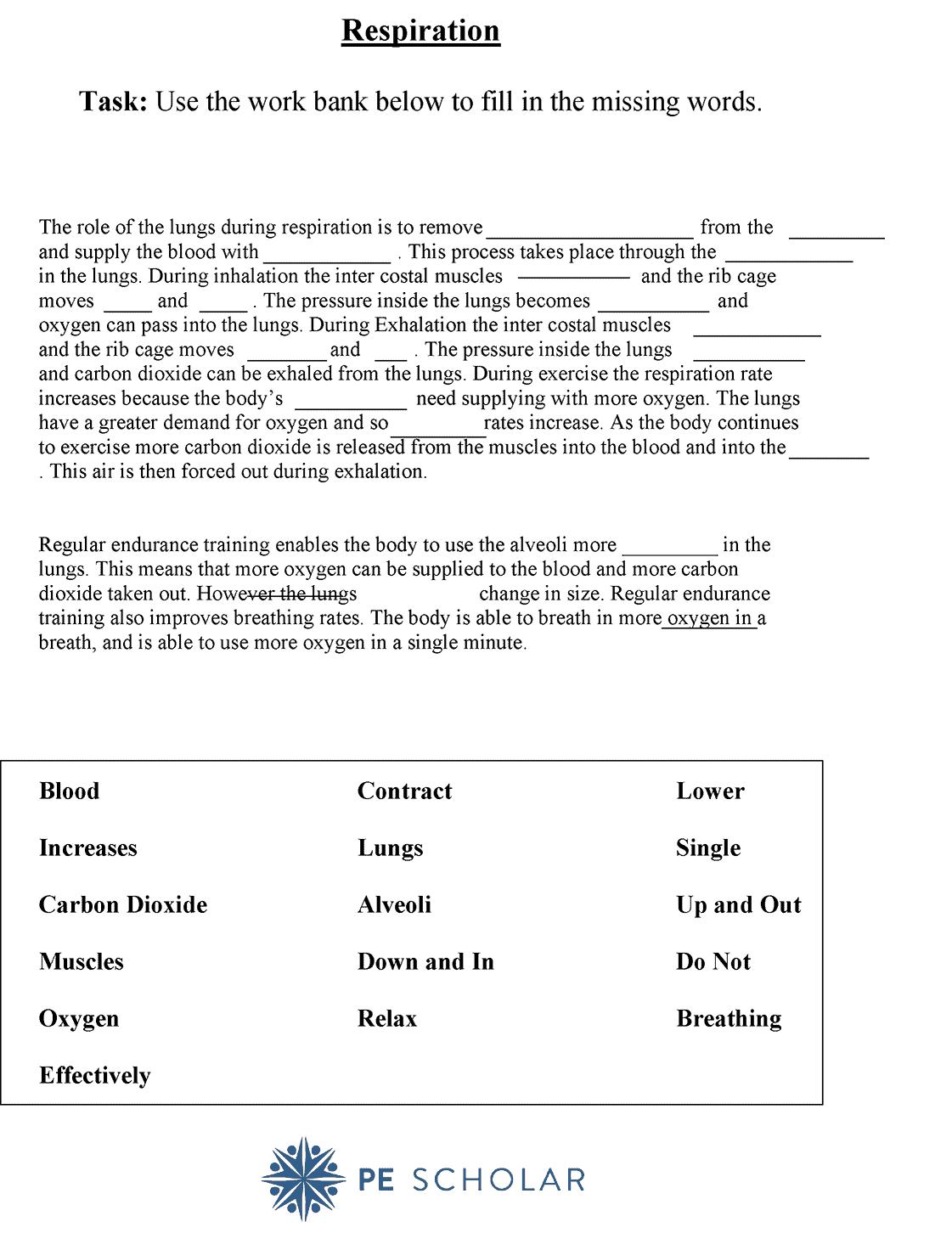 Respiration Worksheet