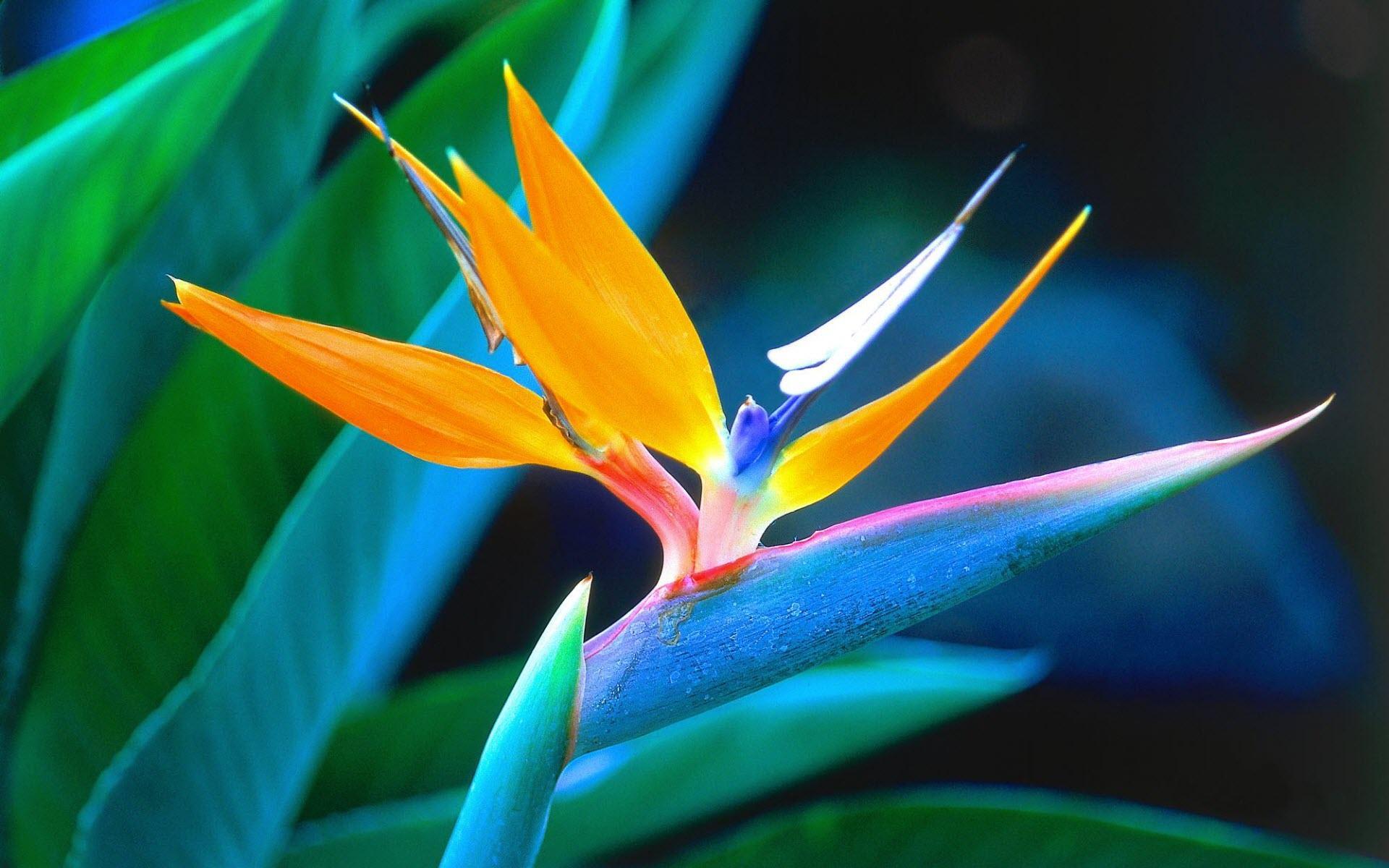 I Fiori Più Belli Del Mondo World Of Flowers Pescinicom