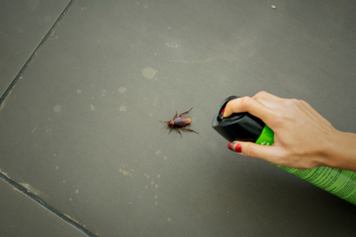 5 Smells Bed Bugs Really Hate - Pest Control Singapore