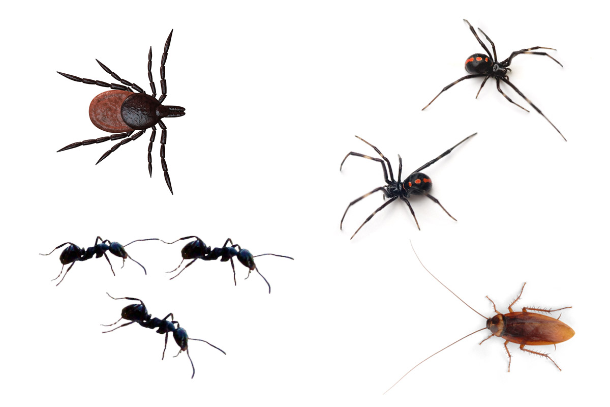 Santa Barbara Pest Control Ants Spiders Insects