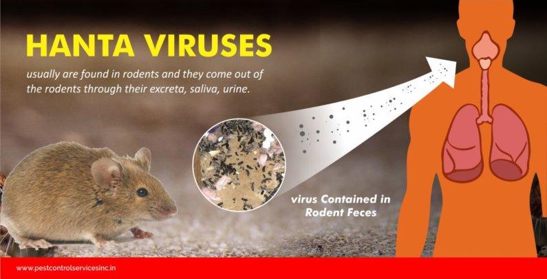Rat & Mouse Archives - Pest Control Services Inc.