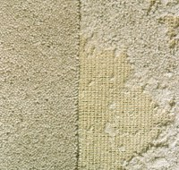 Get Rid of Carpet Moths. Information on Carpet Moth ...