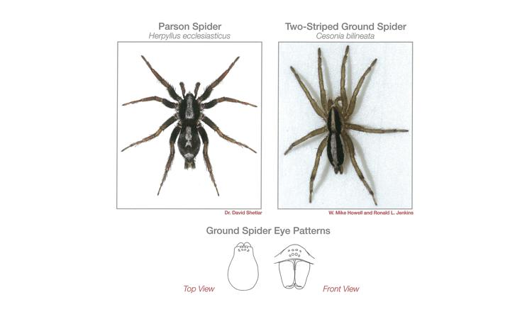 Spider Identification Guide