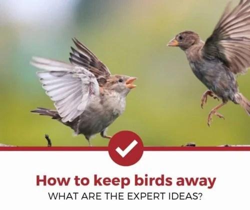 how to keep birds away 5 expert ideas