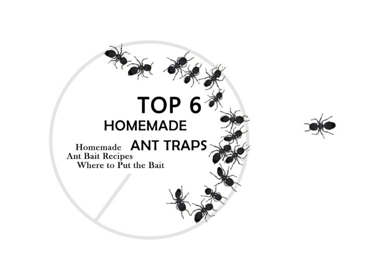 7 Powerful Homemade Ant Killers: How to Make a DIY Ant
