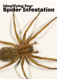 Identifying Your Spider Infestation