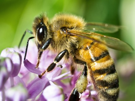 Image result for honey bees