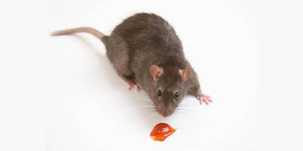 Mouse and attractant gel