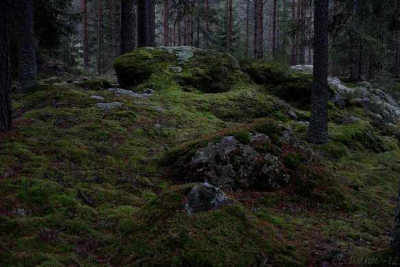 Skog-DSC_1937