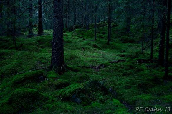 Skog i skymningstid : Kamerahus: NIKON D800 Objektiv: VR Zoom 24-120mm f/4G IF-ED Brännvidd: 38mm,   Bl: 4 Slutartid:1.3, ISO: 400