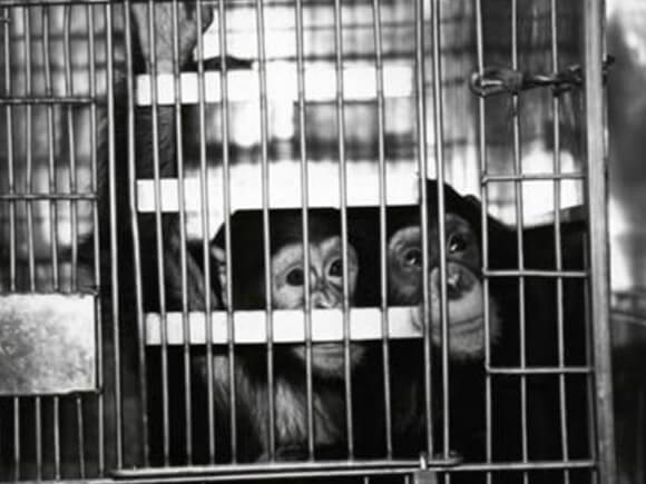 should we use animals for experiemental If we took a fraction of the resources currently devoted to animal experiments and put those towards developing and expanding non-animal methods, we could vastly reduce the use of animals immediately and pave way for the day that they are no longer used at all.