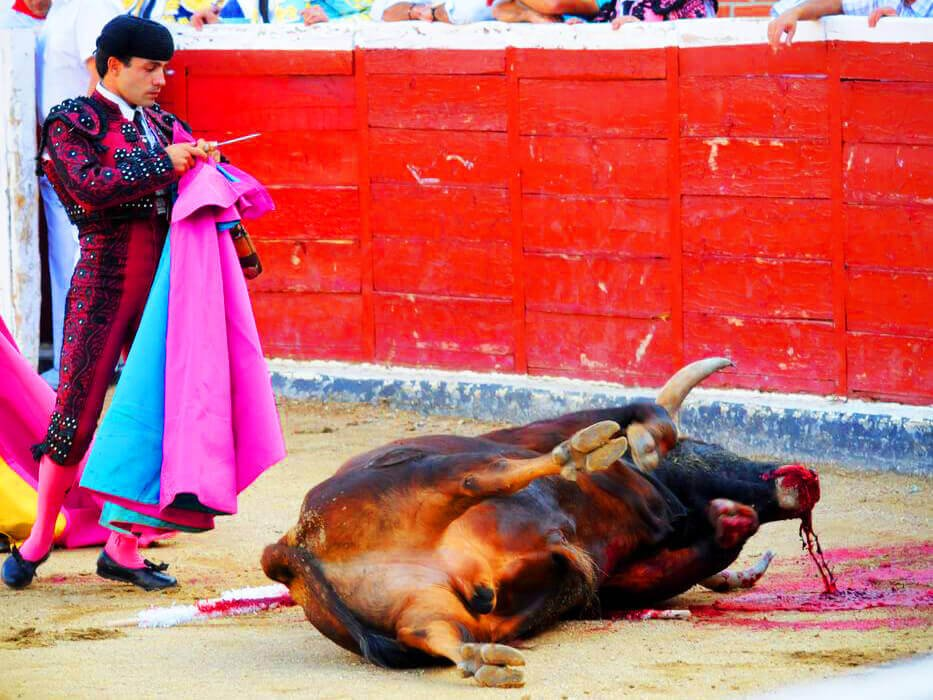 Matador Standing Over Dying Bull at the Bullfight