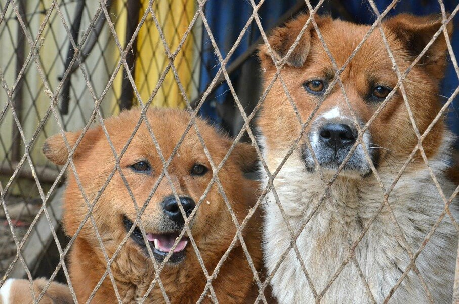 The Violent Yulin Festival Something Meaningful You Can Do  PETA