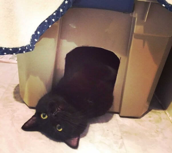 Black cat playing in box