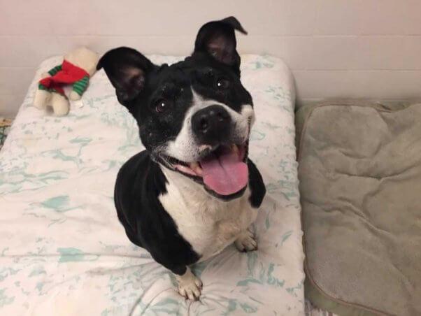 Happy black-and-white dog