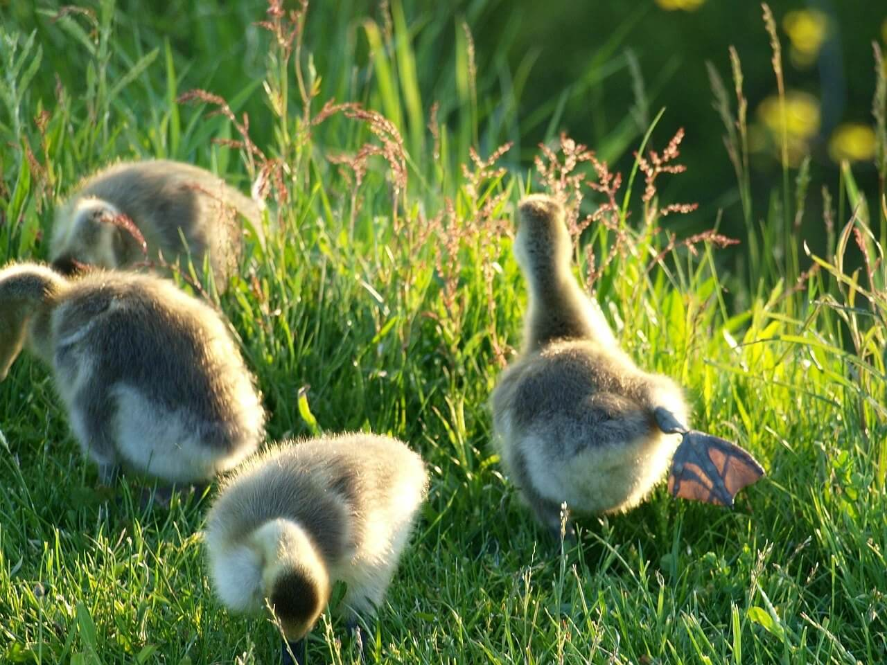 When To Help Spring Baby Animals And When To Leave Them