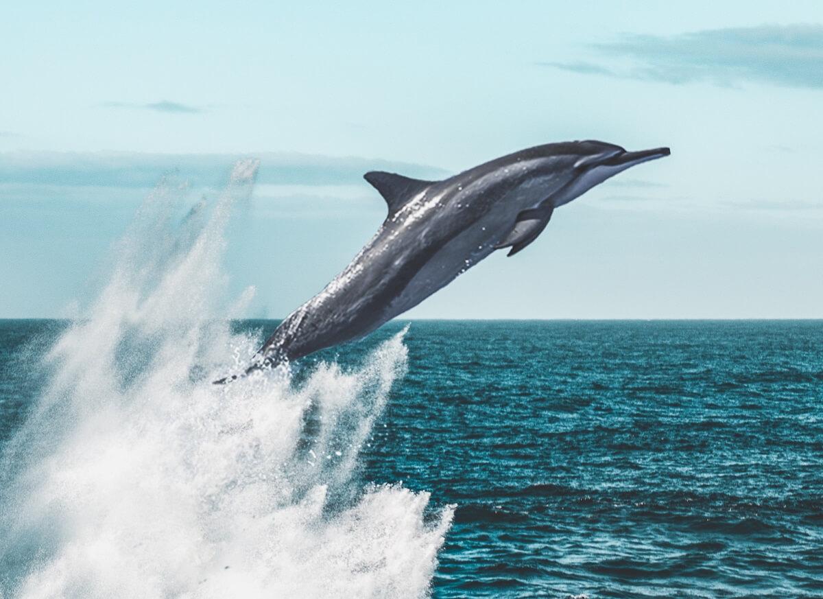 victory dolphinaris arizona closes