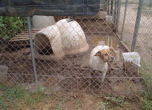 No Kill Policies Slowly Killing Animals PETA