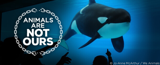 Not Ours Orca Banner