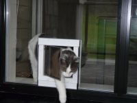 glass doors | Dog Doors, Cat Doors, Pet Doors For Sliding ...