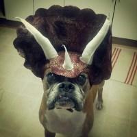 Triceratops Dog Costume  Petagadget