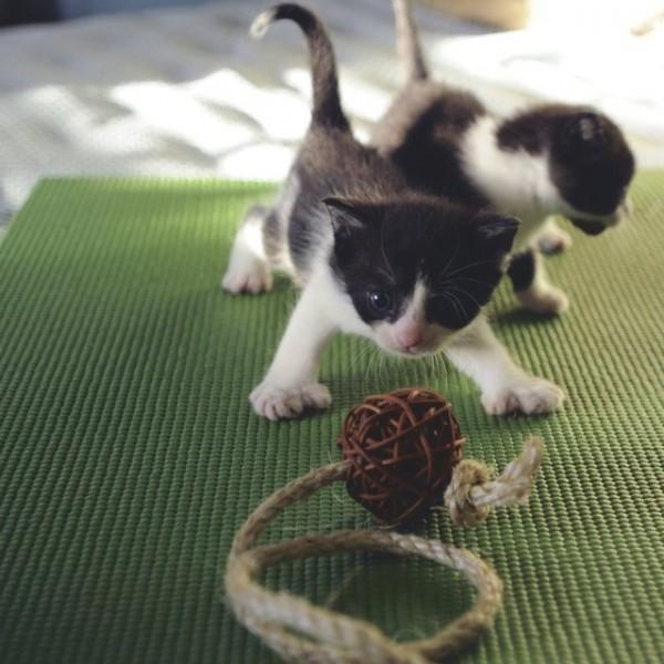 Feline Yoga Mat