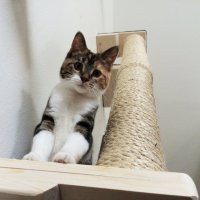 Vertical Sisal Cat Climbing Pole by CatastrophiCreations ...