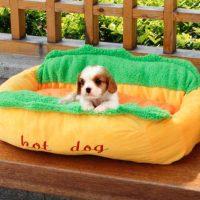 Hot Dog Design Pet Dog Bed  Petagadget