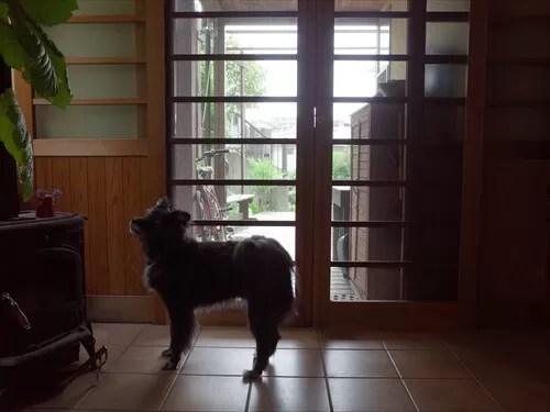大房家の玄関と愛犬・ペロちゃん