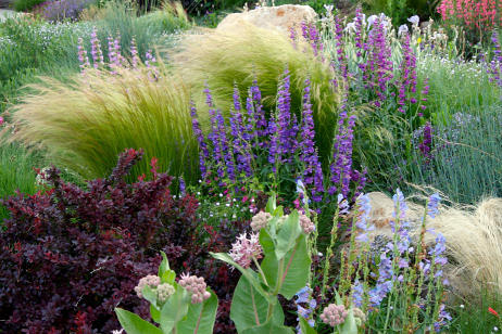 drought-tolerant landscaping company