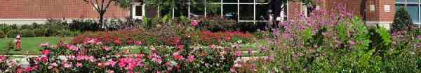 drought resistant commercial landscaping