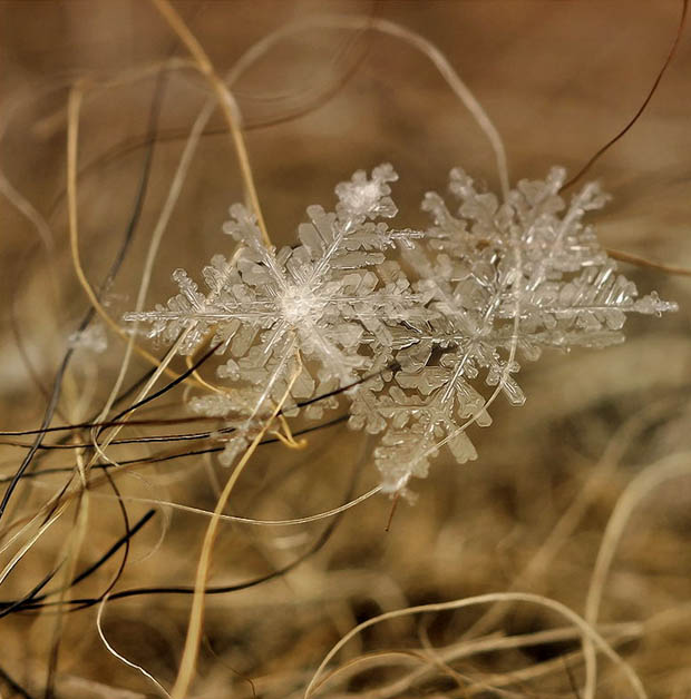 Ethereal Macro Photos of Snowflakes in the Moments Before They Disappear macrosnow 8