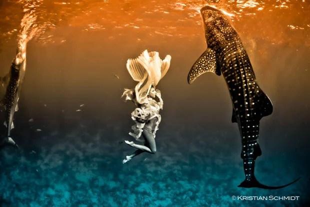 An Underwater Fashion Shoot Featuring a Whale Shark whalesharkfashionshoot 3