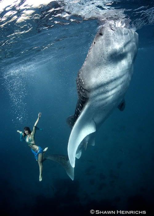 An Underwater Fashion Shoot Featuring a Whale Shark whalesharkfashionshoot 7