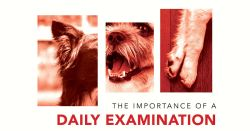 The Importance Of A Daily Examination
