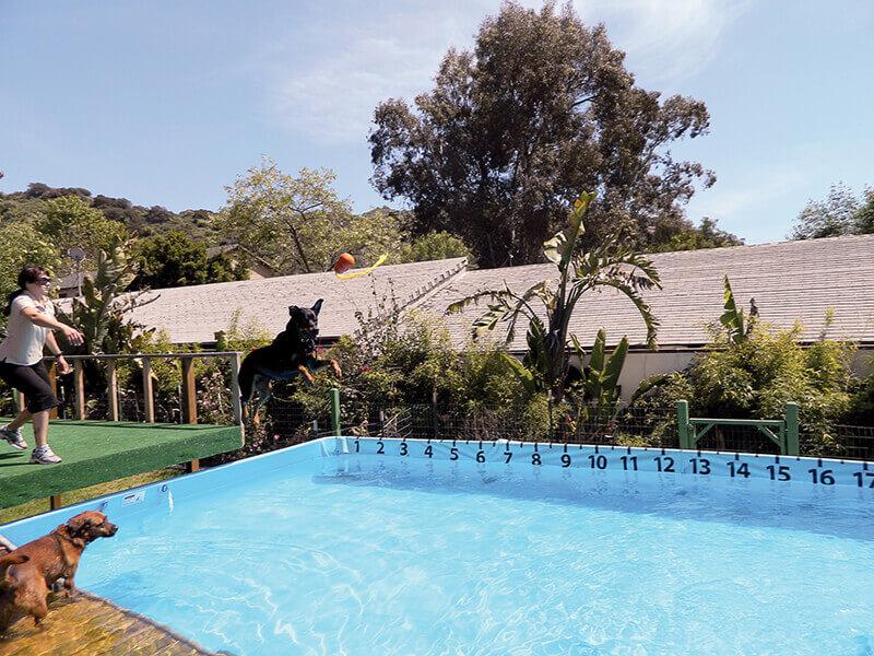 Paradise Ranch Pet Resort dog jumping off dock into pool