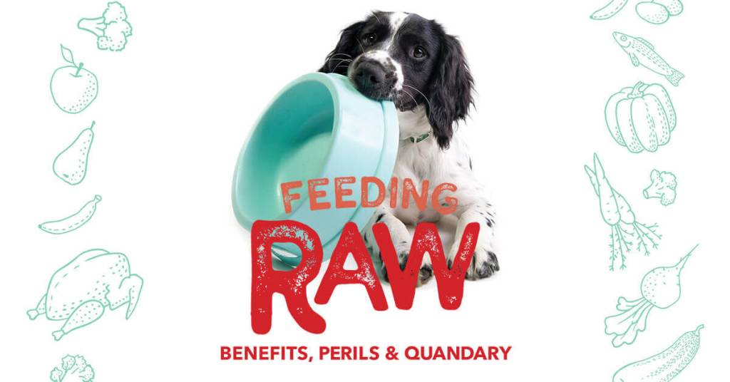 Feeding Raw: Benefits, Perils & Quandary