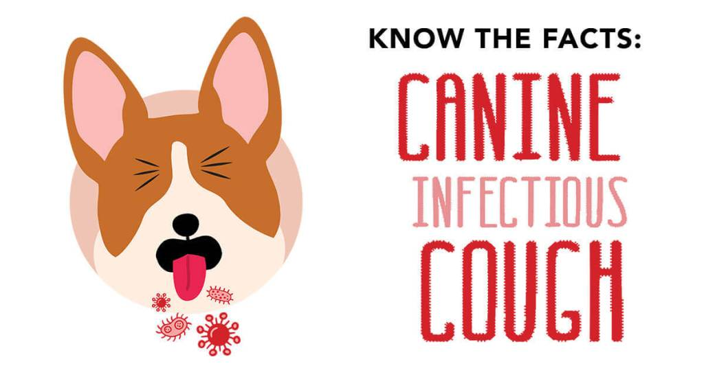 Know the Facts: Canine Infectious Cough