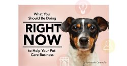 What You Should Be Doing Right Now to Help Your Pet Care Business