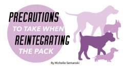 Precautions to Take When Reintegrating the Pack