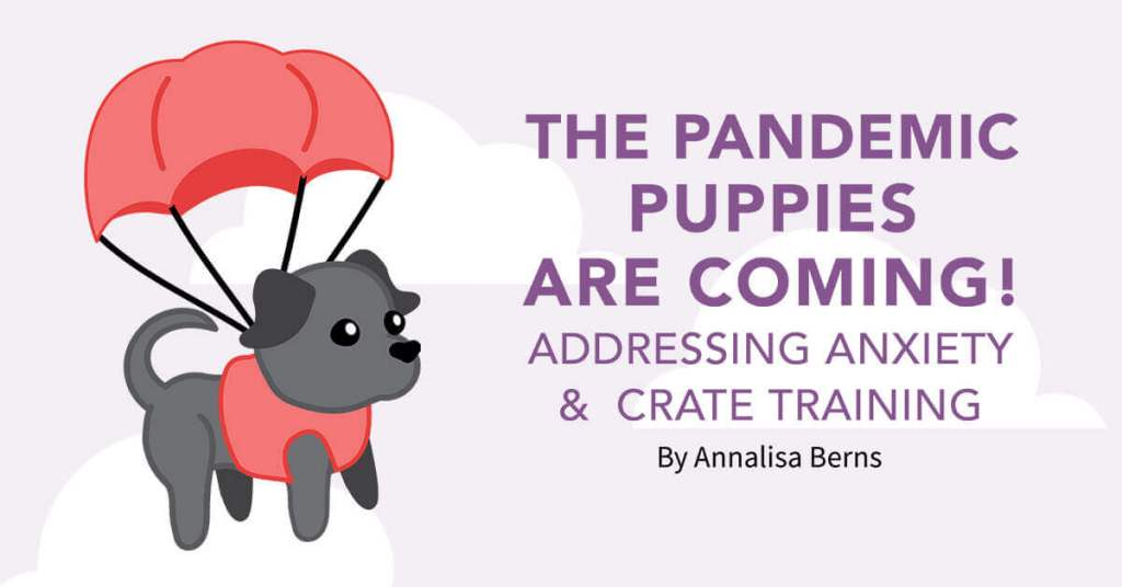 The Pandemic Puppies Are Coming! Addressing Anxiety & Crate Training