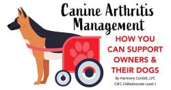 Canine Arthritis Management How You Can Support Owners & Their Dogs