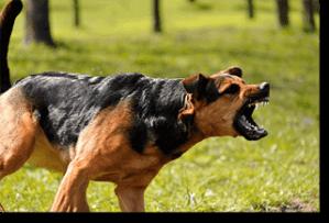 Offensive Aggressive Dog